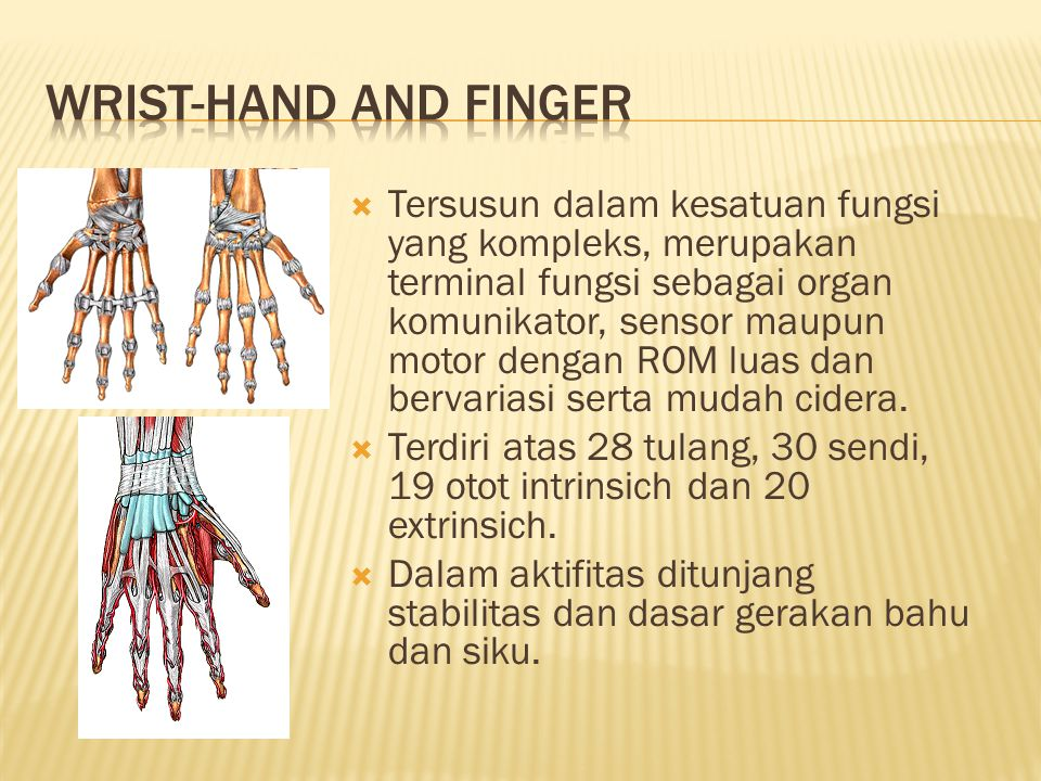 Wrist-Hand and Finger