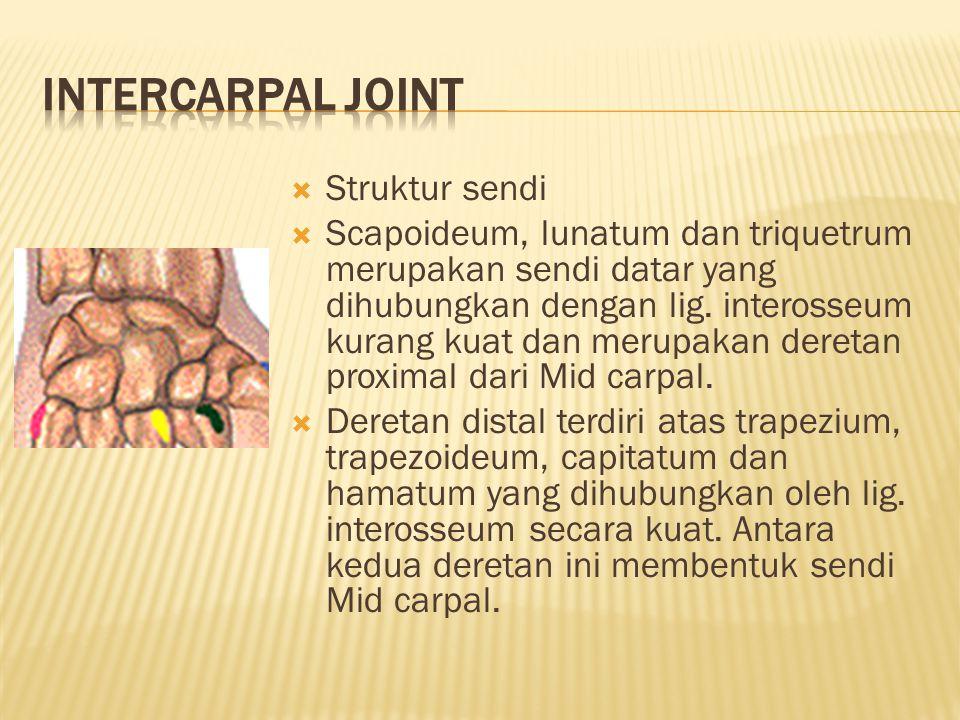 INTERCARPAL JOINT Struktur sendi