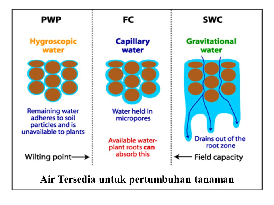 Air Tersedia untuk pertumbuhan tanaman