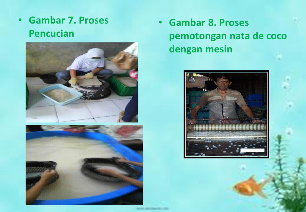Gambar 7. Proses Pencucian