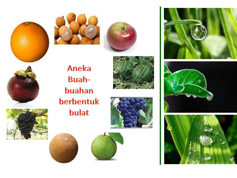 Aneka Buah-buahan berbentuk bulat