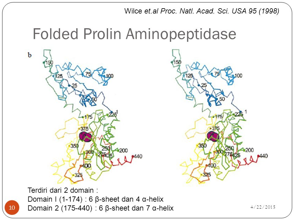 Folded Prolin Aminopeptidase