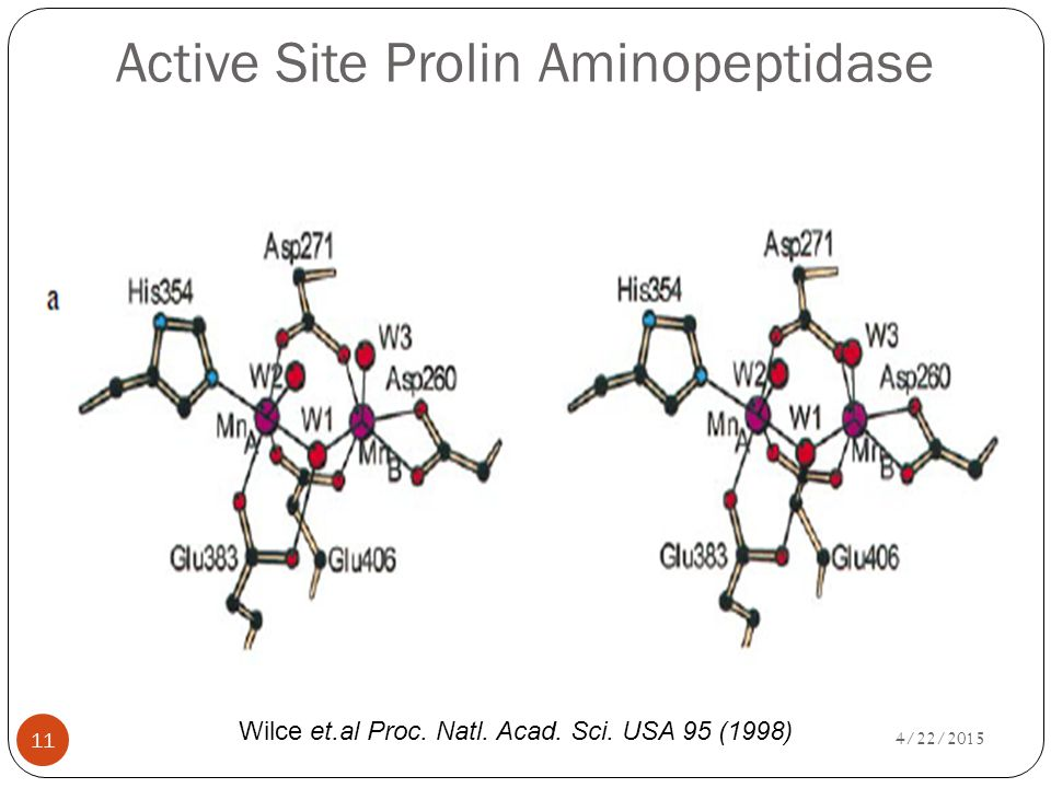 Active Site Prolin Aminopeptidase