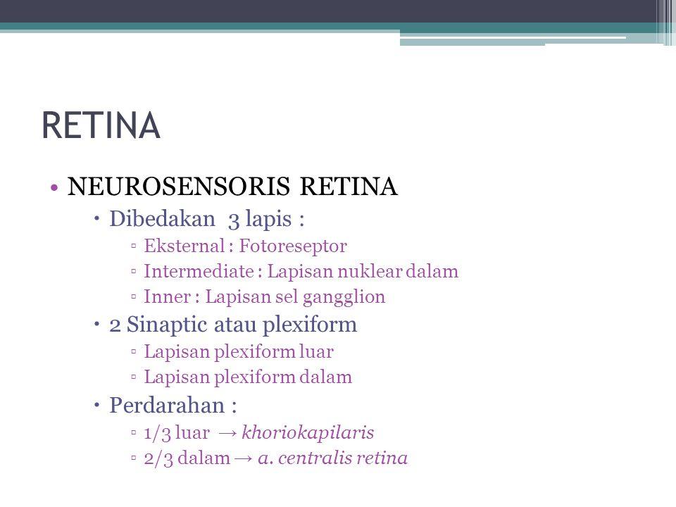 RETINA NEUROSENSORIS RETINA Dibedakan 3 lapis :