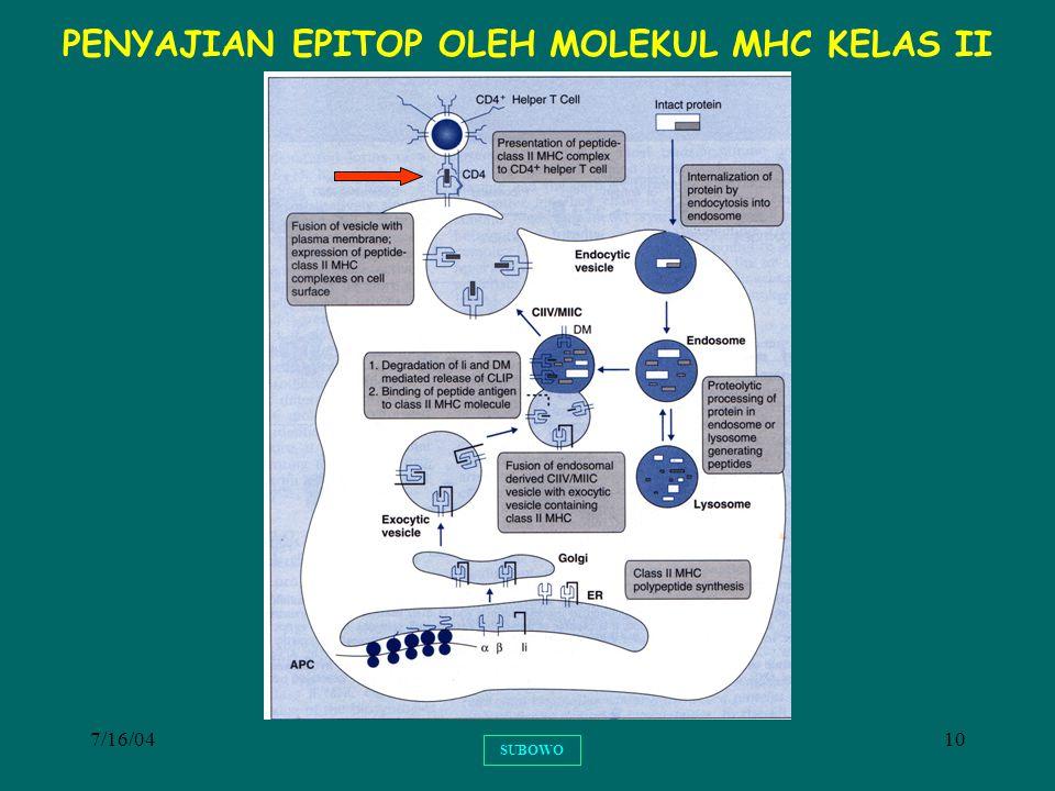 PENYAJIAN EPITOP OLEH MOLEKUL MHC KELAS II