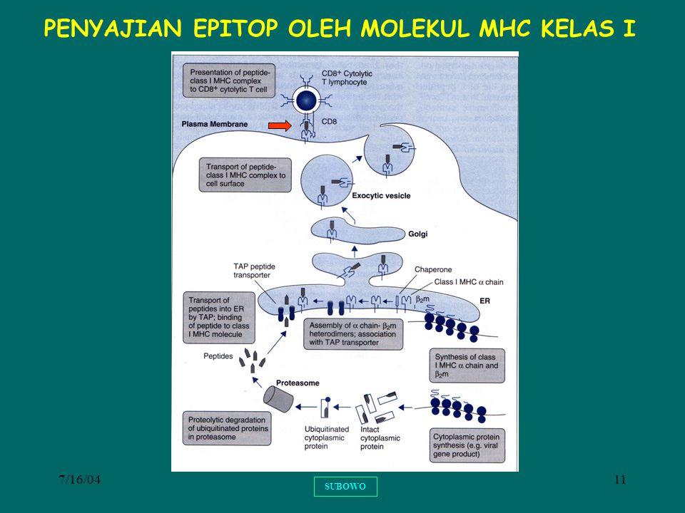 PENYAJIAN EPITOP OLEH MOLEKUL MHC KELAS I