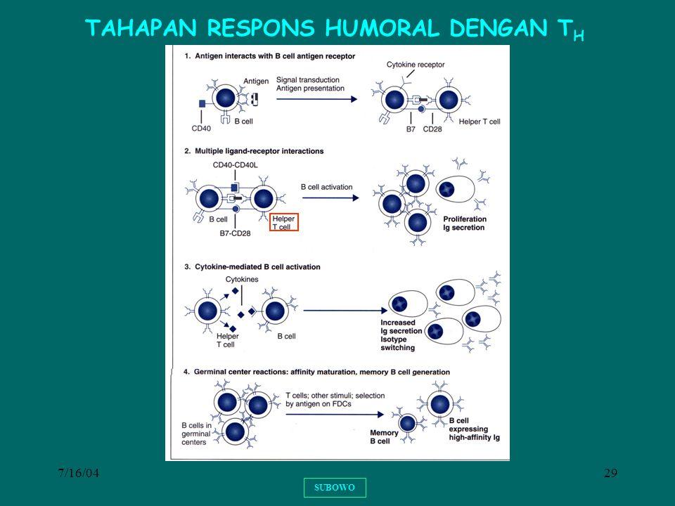 TAHAPAN RESPONS HUMORAL DENGAN TH