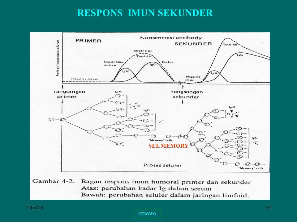 RESPONS IMUN SEKUNDER SEL MEMORY 7/16/04 SUBOWO