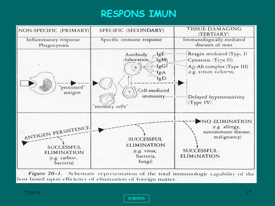 RESPONS IMUN 7/16/04 SUBOWO