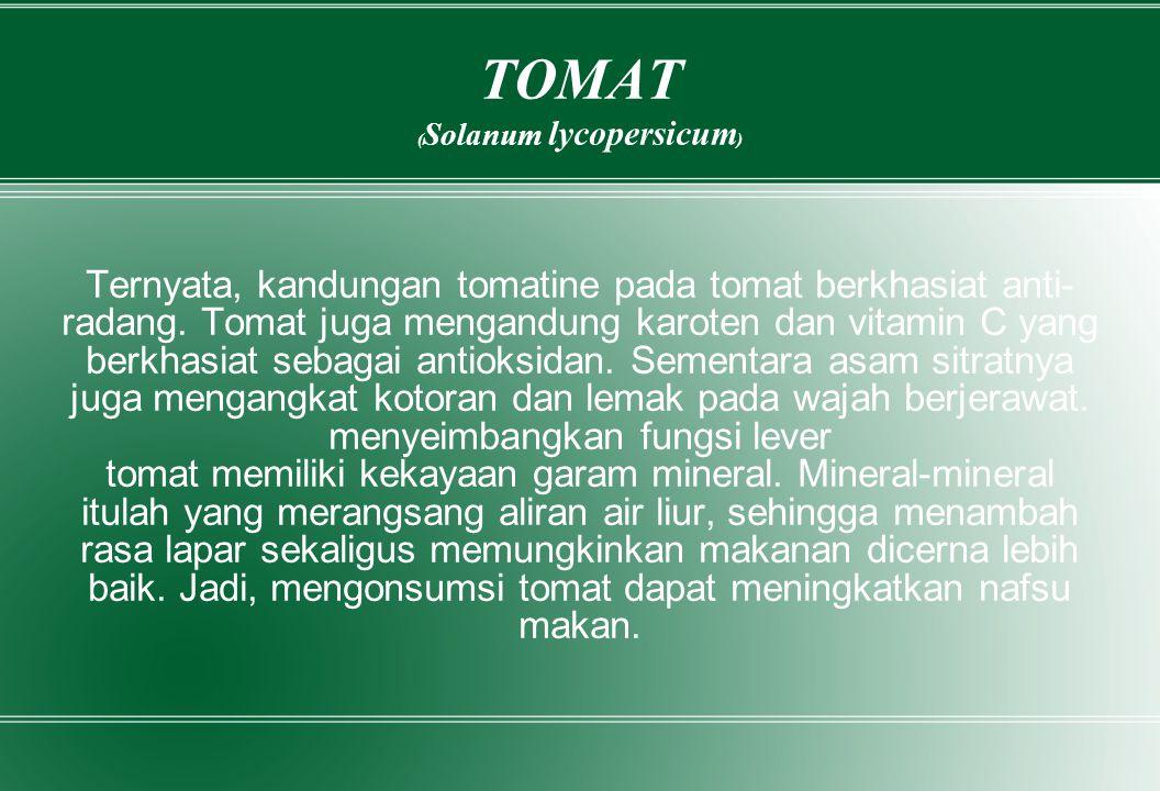 TOMAT (Solanum lycopersicum)