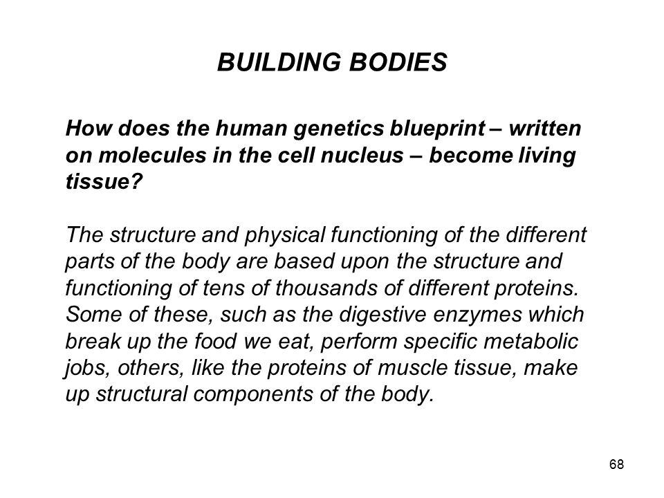 BUILDING BODIES How does the human genetics blueprint – written