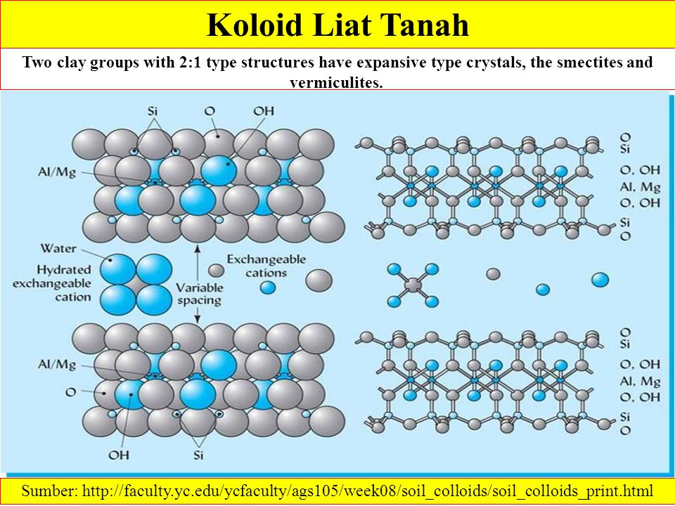 Koloid Liat Tanah Two clay groups with 2:1 type structures have expansive type crystals, the smectites and vermiculites.