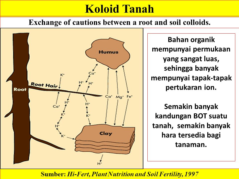 Koloid Tanah Exchange of cautions between a root and soil colloids.