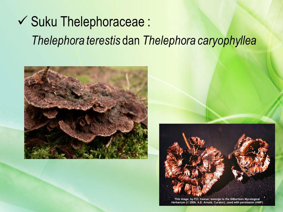Suku Thelephoraceae : Thelephora terestis dan Thelephora caryophyllea