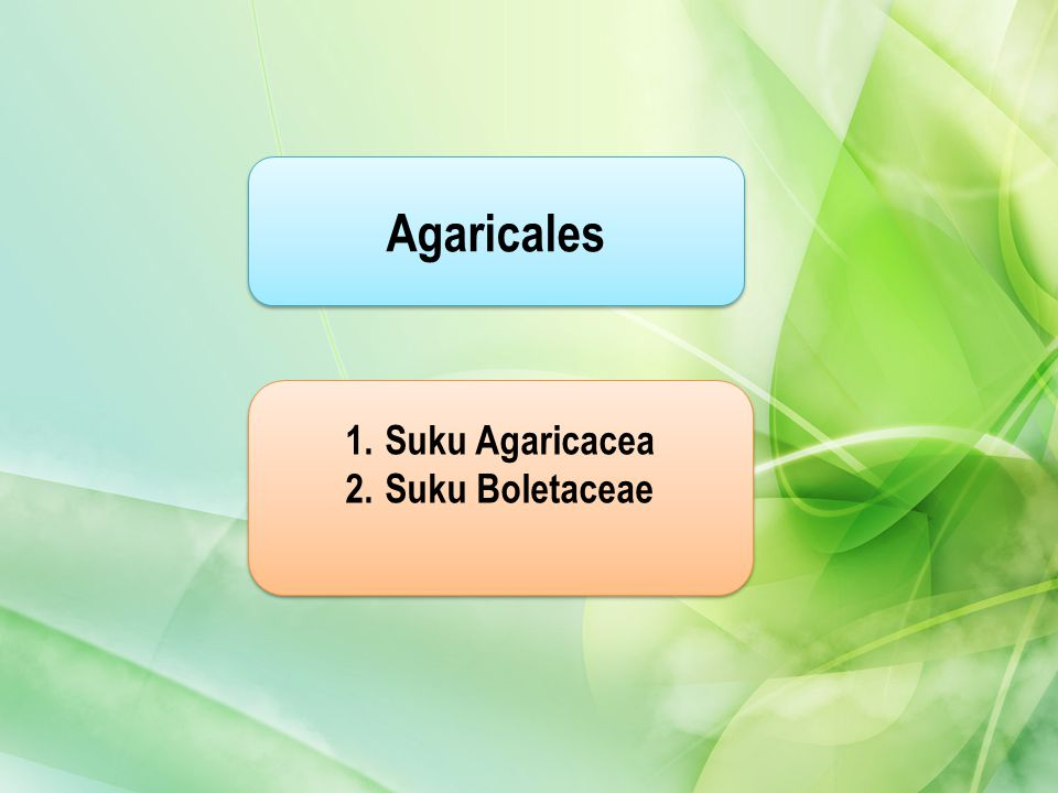 Agaricales Suku Agaricacea Suku Boletaceae