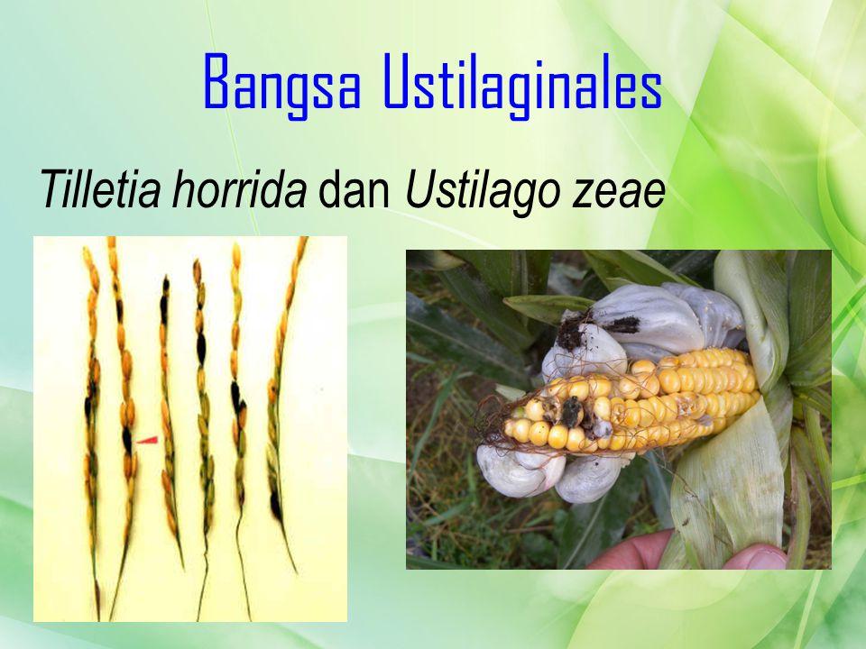 Bangsa Ustilaginales Tilletia horrida dan Ustilago zeae