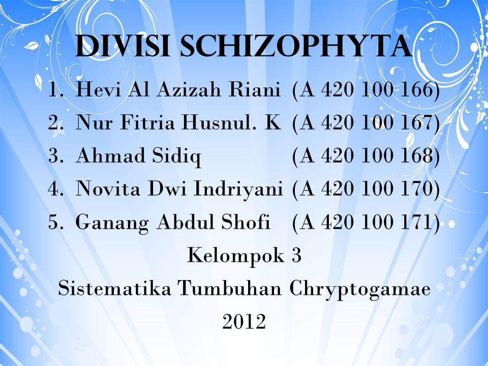 DIVISI SCHIZOPHYTA Hevi Al Azizah Riani (A 420 100 166)