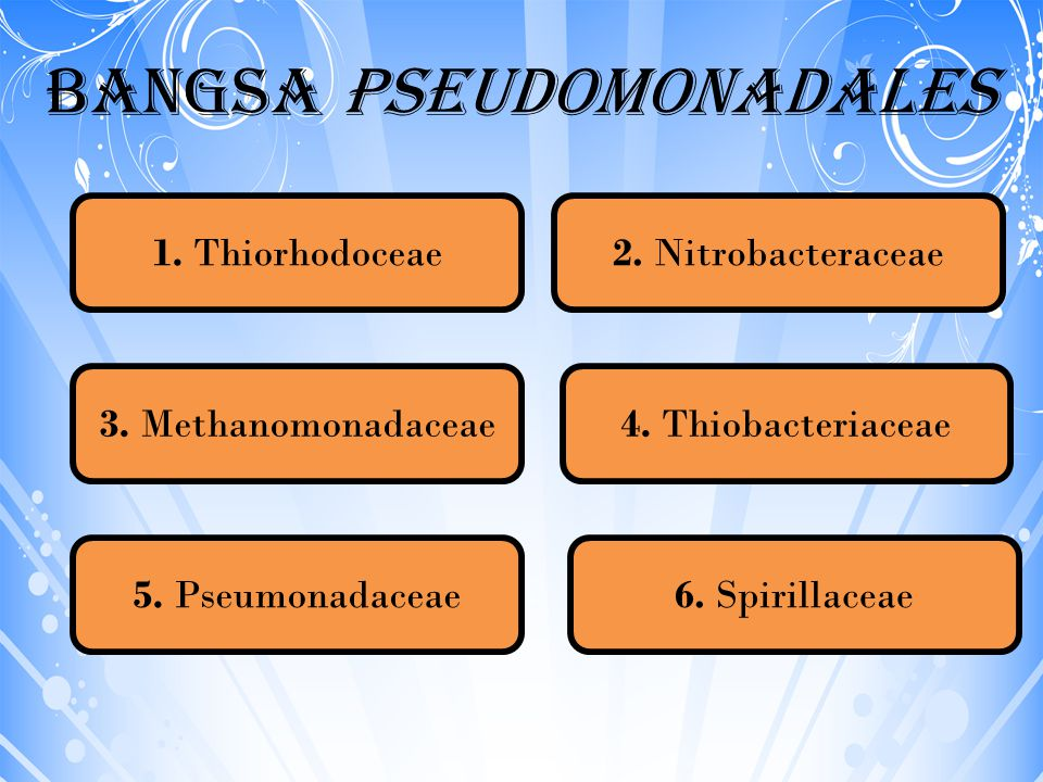 Bangsa Pseudomonadales