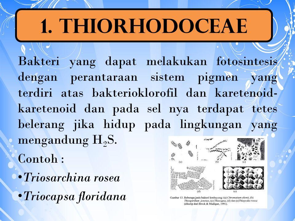 1. Thiorhodoceae