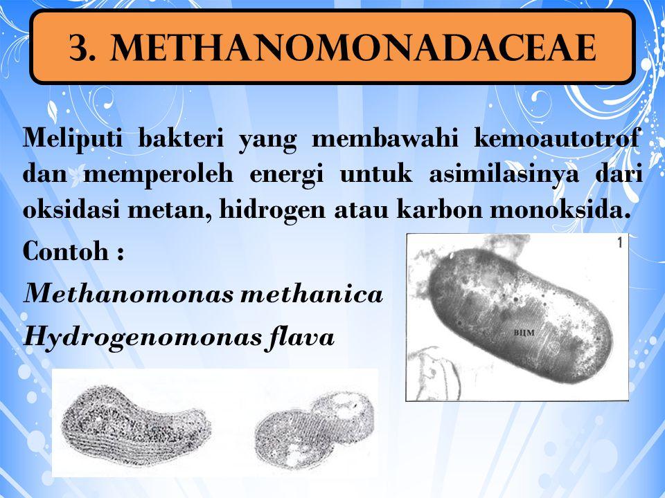 3. Methanomonadaceae