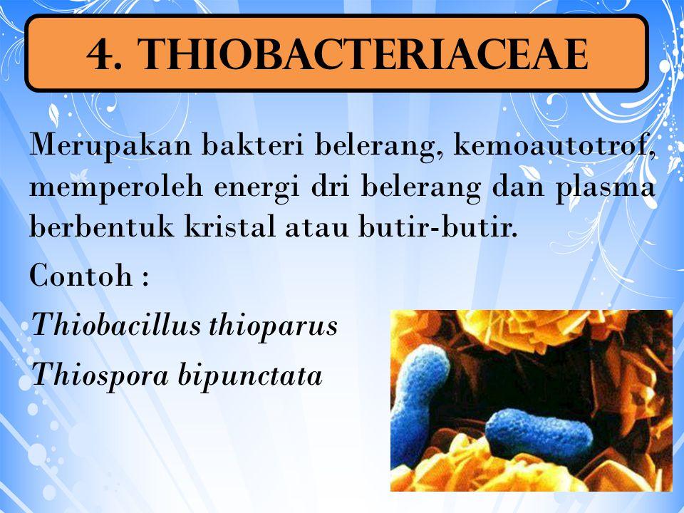 4. Thiobacteriaceae