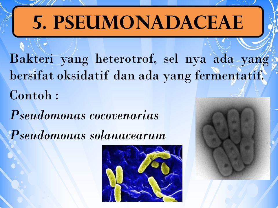 5. Pseumonadaceae