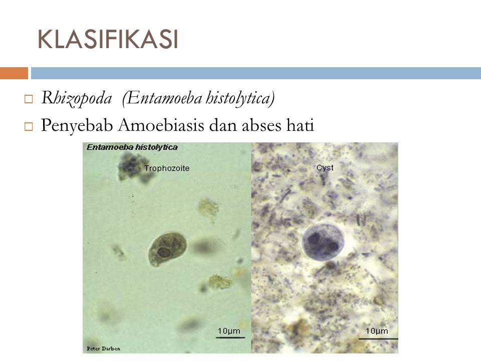 KLASIFIKASI Rhizopoda (Entamoeba histolytica)