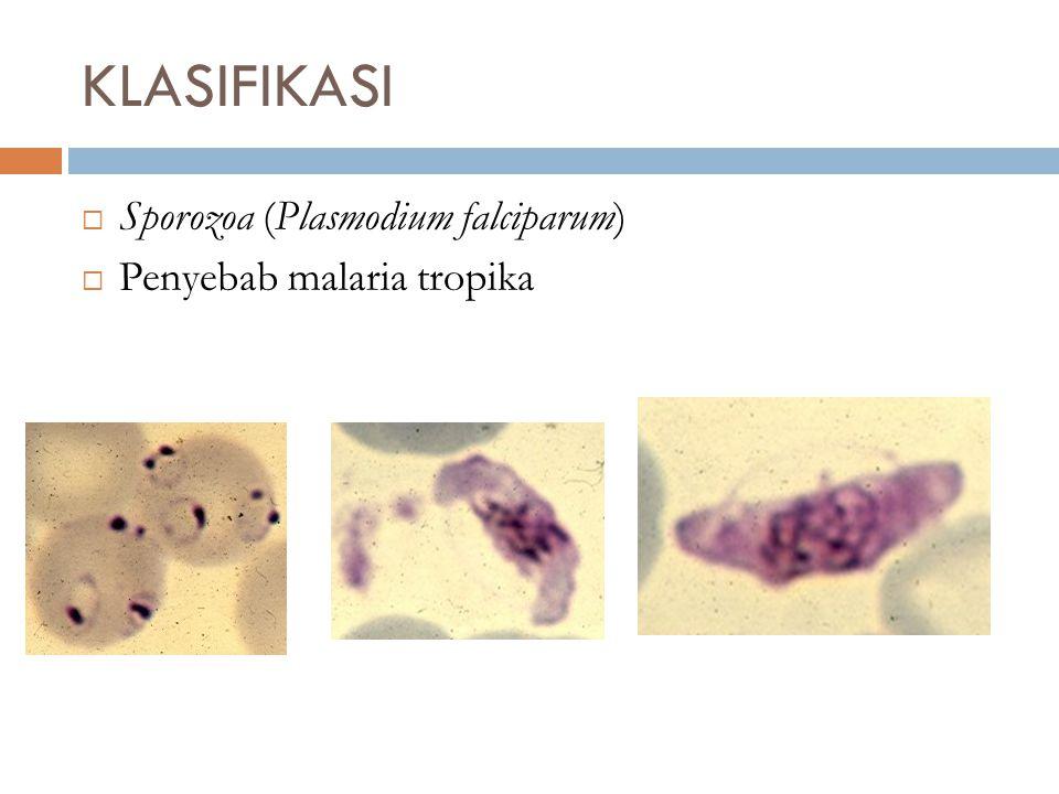 KLASIFIKASI Sporozoa (Plasmodium falciparum) Penyebab malaria tropika
