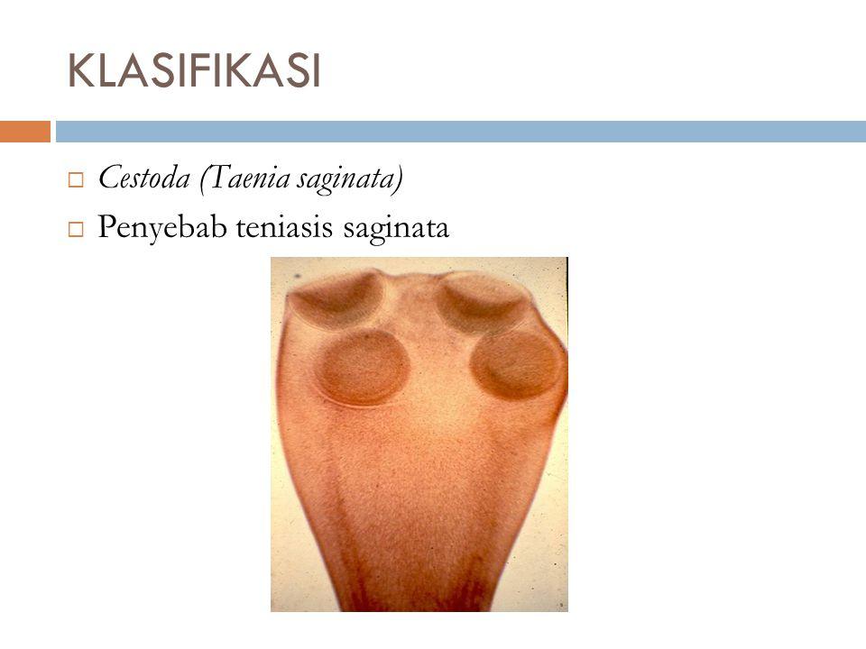 KLASIFIKASI Cestoda (Taenia saginata) Penyebab teniasis saginata
