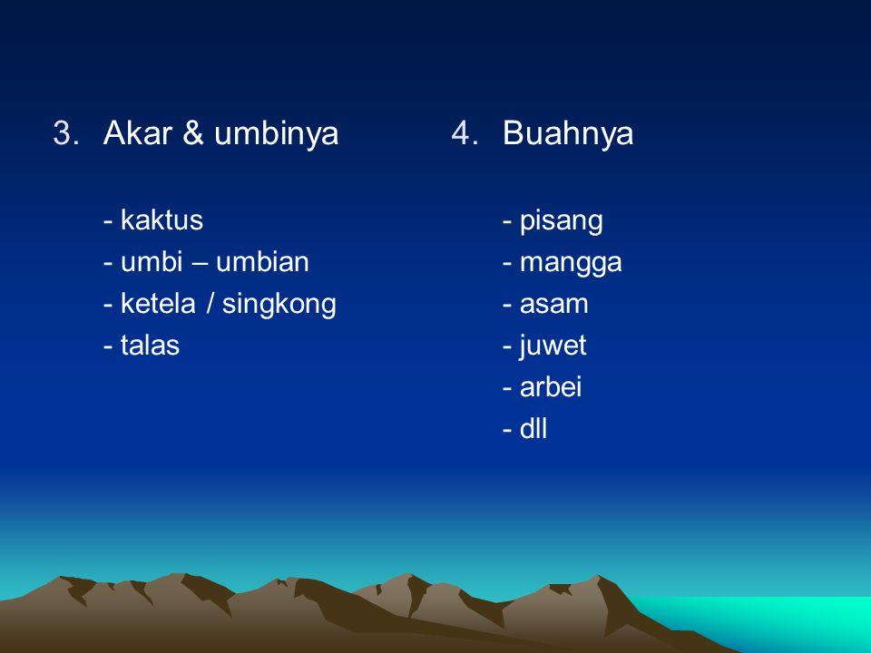 Akar & umbinya Buahnya - kaktus - umbi – umbian - ketela / singkong