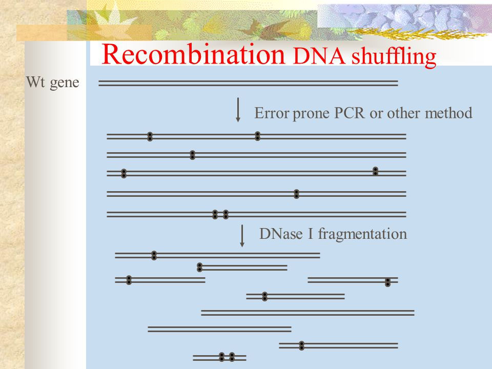 Recombination DNA shuffling