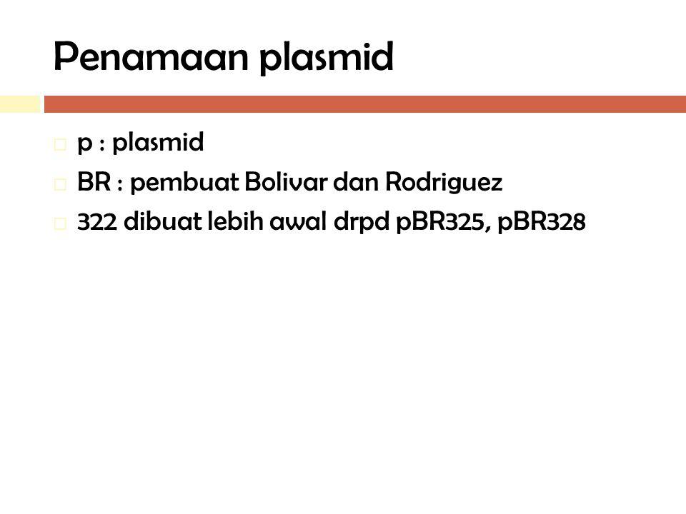Penamaan plasmid p : plasmid BR : pembuat Bolivar dan Rodriguez