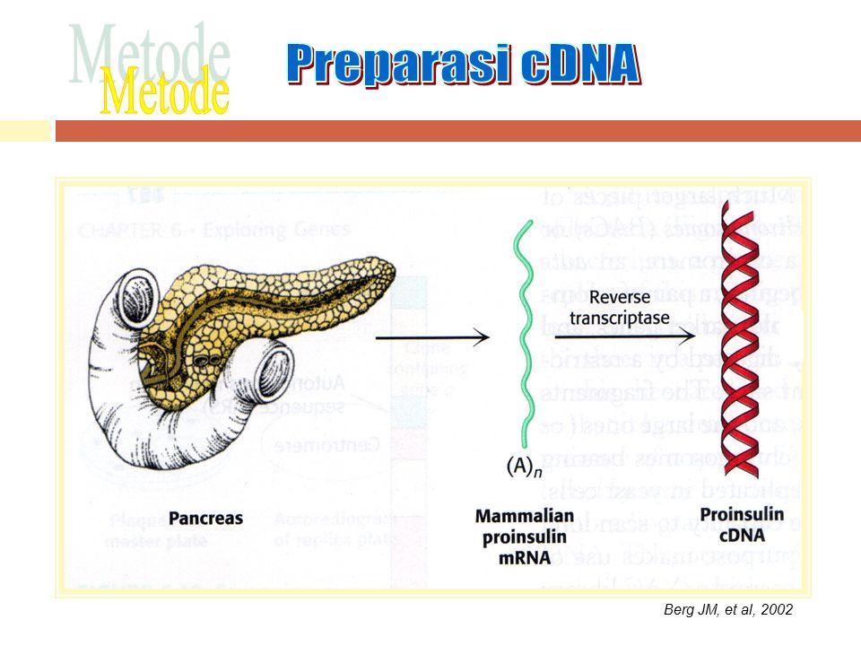 Preparasi cDNA Metode Berg JM, et al, 2002