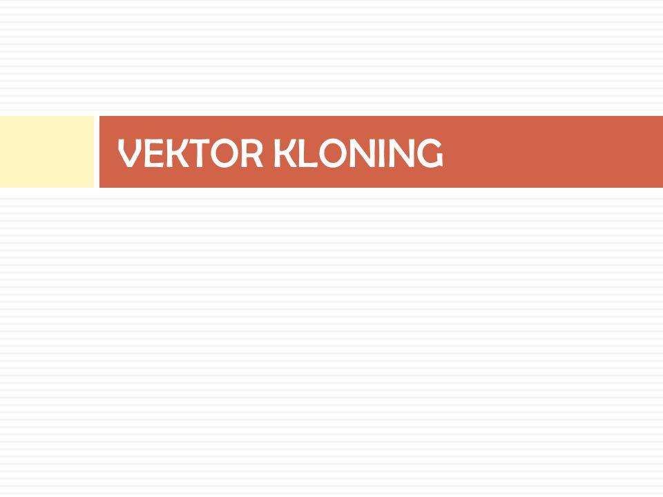 VEKTOR KLONING