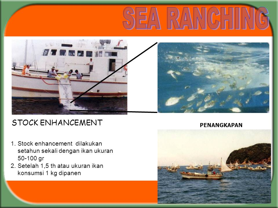 SEA RANCHING STOCK ENHANCEMENT