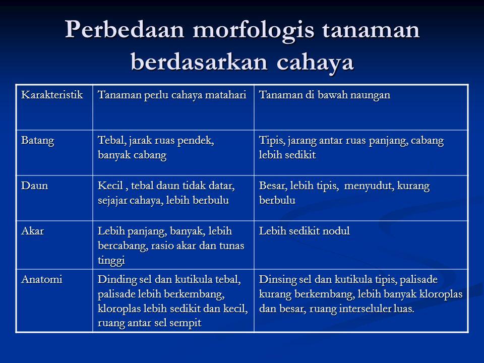 Perbedaan morfologis tanaman berdasarkan cahaya