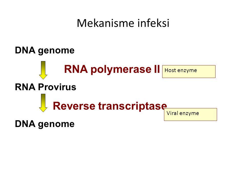 Mekanisme infeksi DNA genome RNA polymerase II RNA Provirus