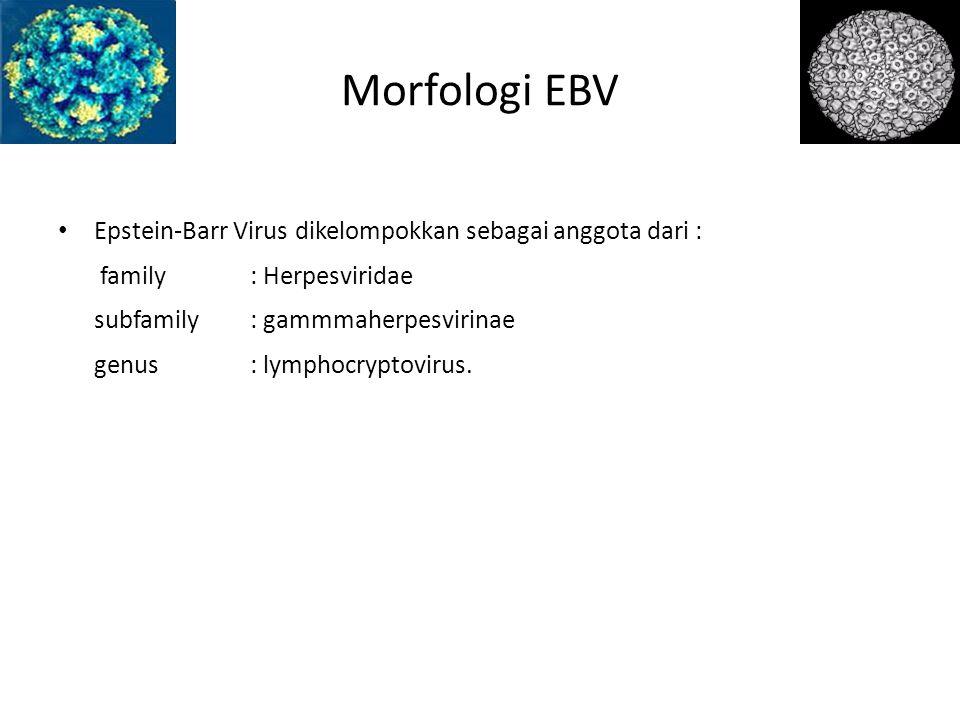 Morfologi EBV Epstein-Barr Virus dikelompokkan sebagai anggota dari :