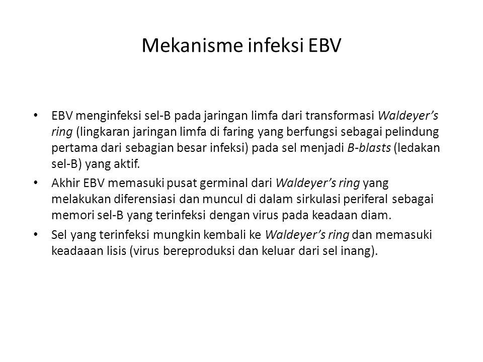 Mekanisme infeksi EBV