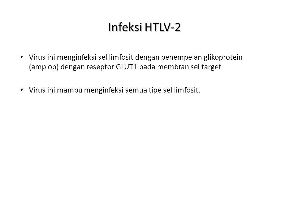 Infeksi HTLV-2 Virus ini menginfeksi sel limfosit dengan penempelan glikoprotein (amplop) dengan reseptor GLUT1 pada membran sel target.