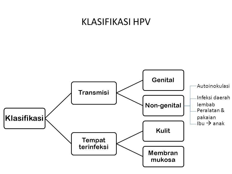 KLASIFIKASI HPV Transmisi Genital Non-genital Tempat terinfeksi Kulit