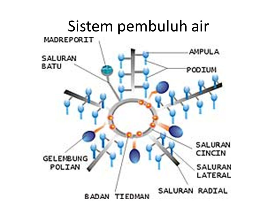 Sistem pembuluh air