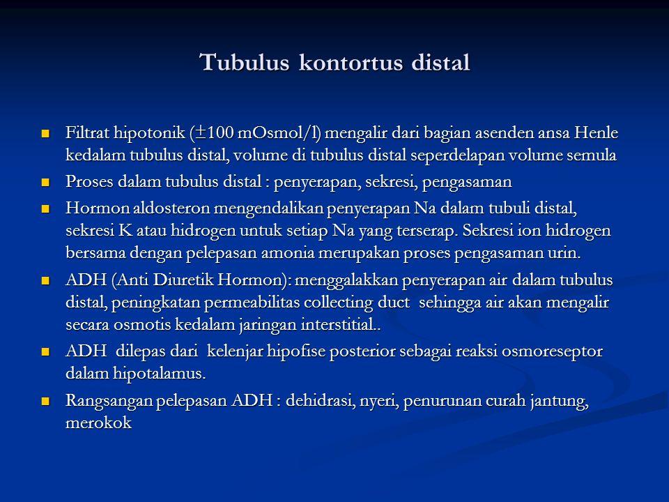 Tubulus kontortus distal