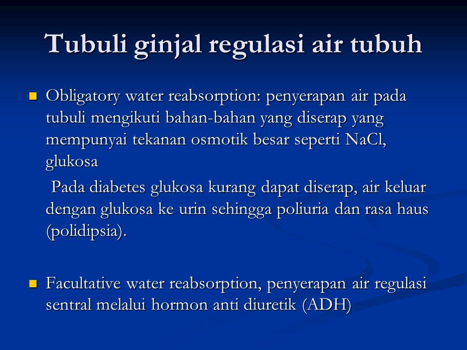 Tubuli ginjal regulasi air tubuh
