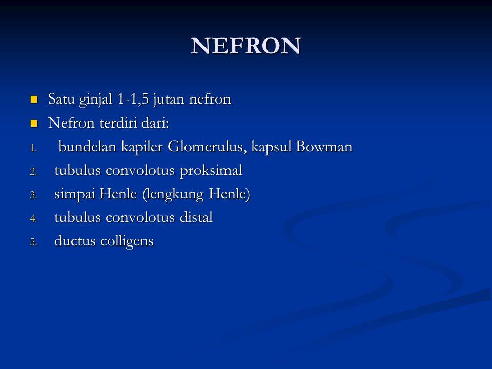 nefron Satu ginjal 1-1,5 jutan nefron Nefron terdiri dari: