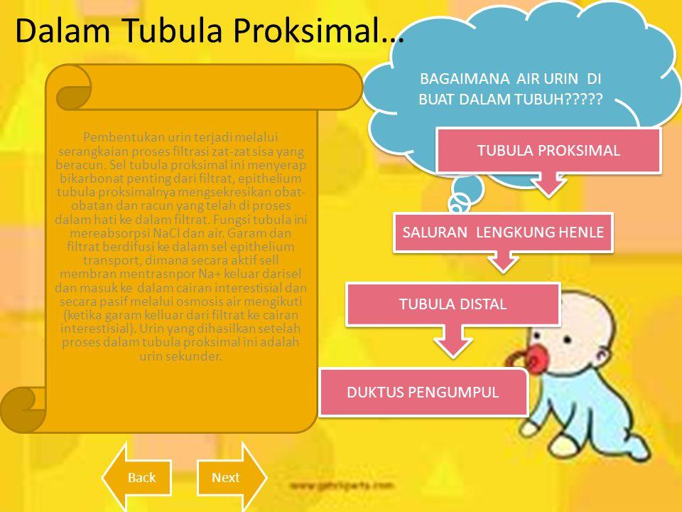 Dalam Tubula Proksimal…