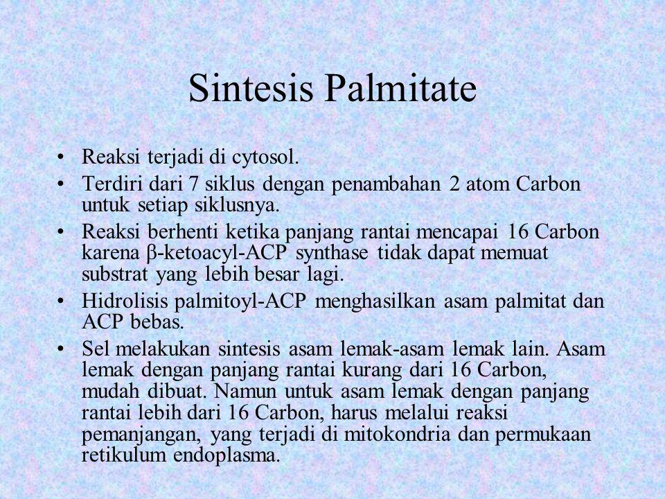 Sintesis Palmitate Reaksi terjadi di cytosol.