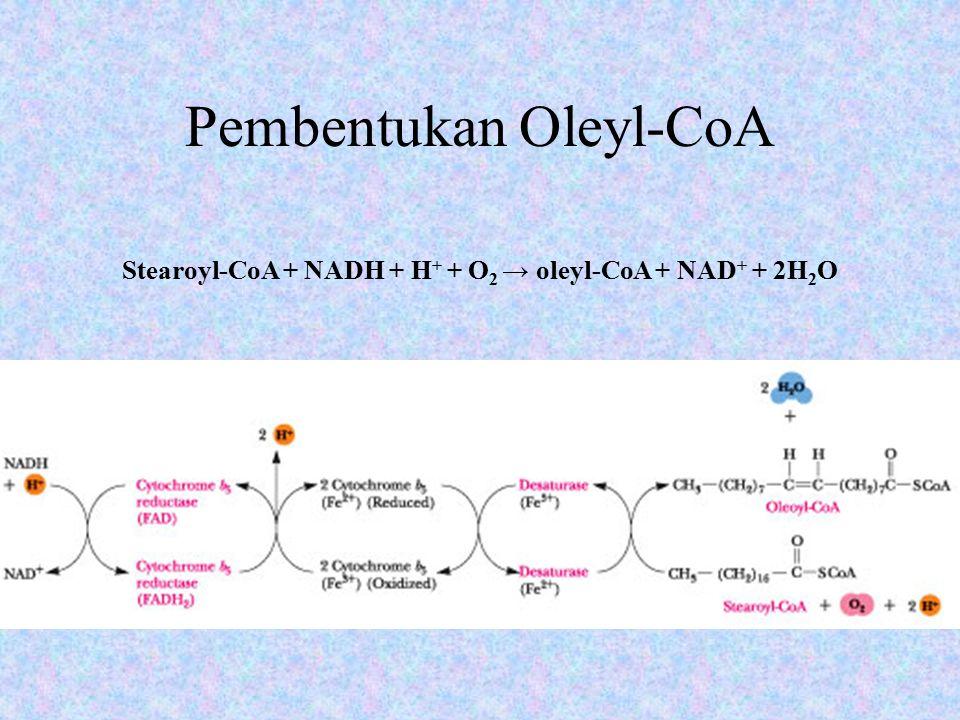 Pembentukan Oleyl-CoA