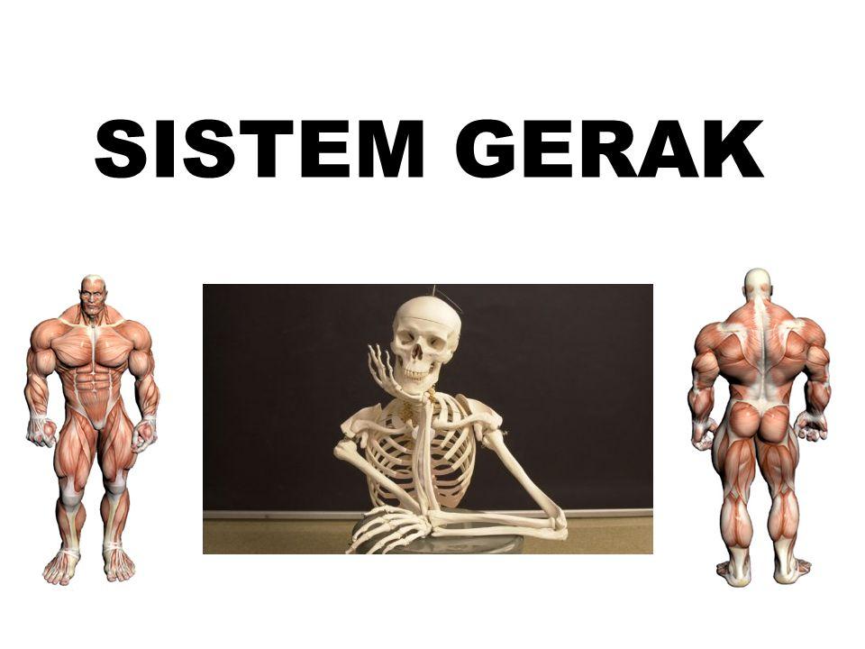 SISTEM GERAK