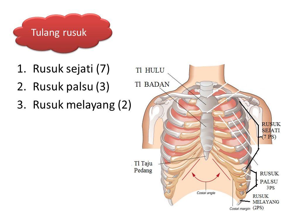 Tulang rusuk Rusuk sejati (7) Rusuk palsu (3) Rusuk melayang (2)